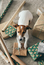 Preparing Christmas Presents With Dog