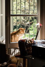 Big Red Cat Bathing In Sunshin...