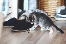 Close-up Of Kitten By Shoe On Hardwood Floor