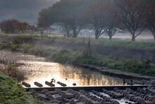 朝靄の立ち込める川と...