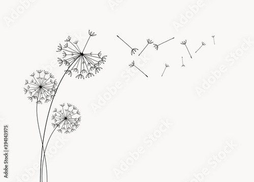 Abstract background of a dandelion for design. The wind blows the seeds of a dandelion.  Vector illustration