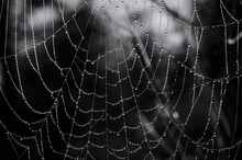Close-up Of Wet Spider Web Hanging Outdoors