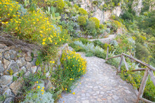 Taormina - The Path Among The Spring Mediterranean Flowers.