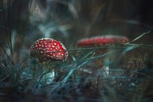 Close-up Of Red Fly Agaric Mushroom Growing On Land