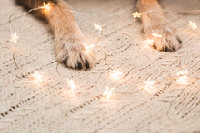 Soft Dog Paws On A Knitted Fabric, Framed By A Christmas Garland