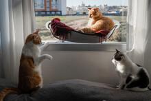 Tres Gatos Domésticos Interac...