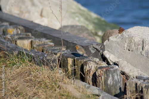Obraz Mały ptaszek siedzący drewnianych palikach na tle kamieni i wody - fototapety do salonu