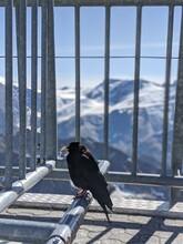 Black Bird Perching On A Railing