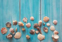 Many Beautiful Sea Shells On B...