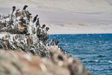 Bird Colony Of Guano Cormorant In Paracas National Park At The Pacific Ocean Coast Line Of Peru. Guanay Cormorant Or Guanay Shag, Leucocarbo Bougainvillii, On Guano Covered Rocks