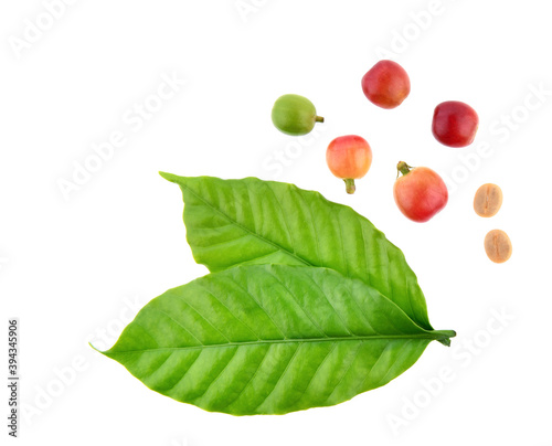 Fototapeta Red coffee beans isolated on white background