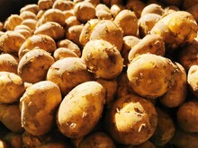 Potatoes In The Morning Sun