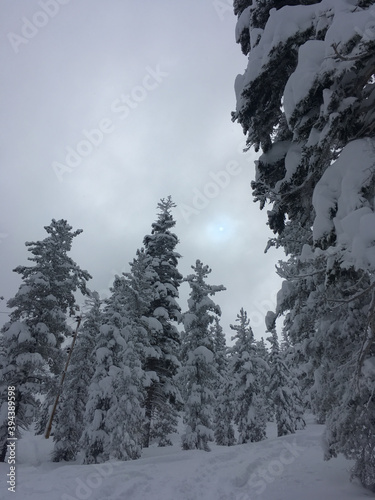 Canvas Print Moody winter scene with snow covered trees and a hint of the sun behind the clou