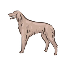 Cute Dog Irish Setter Breed Pedigree Vector Illustration