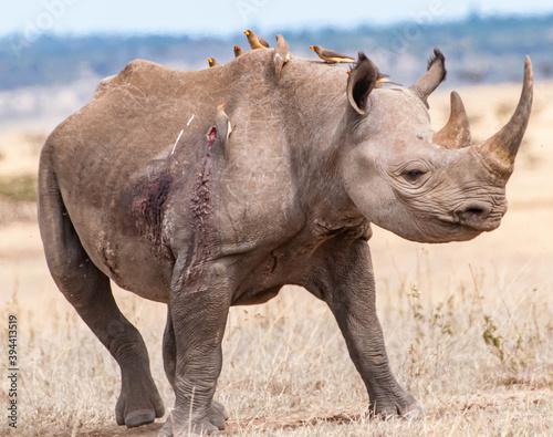 rhino in the wild Billede på lærred