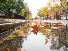 Fallen Leaves In Puddle, Sweden