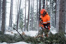 Lumberjack At Work, Sweden