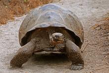 Tortoise, Ecuador