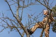 Man Pruning Tree, Denmark