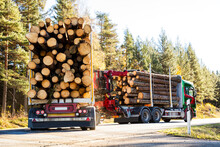 Lorries Transporting Logs, Swe...