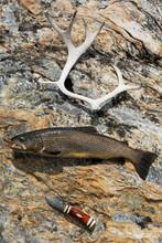 Fish, Knife And Antler On Rock, Sweden