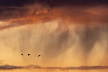Silhouettes Of Birds Against E...