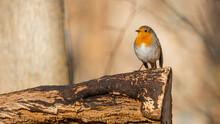 Wildlife Nature Bird Backgroun...