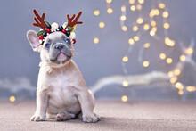 Cute French Bulldog Dog Puppy ...