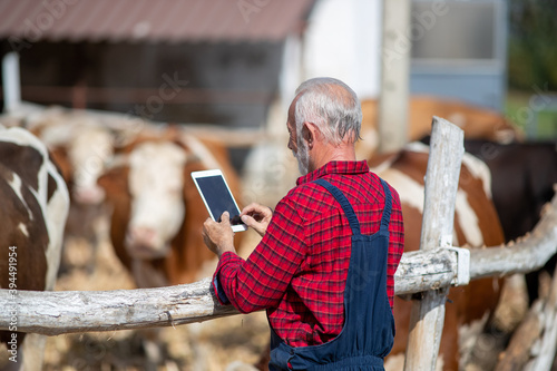 Fotografia, Obraz Farmer with tablet in front of cows in barn