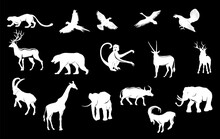 Animals Silhouettes And Logos ...