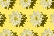 Chrysanthemum Flower With Shad...