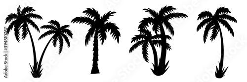 palm tree Silhouettes of palm trees. vector - fototapety na wymiar