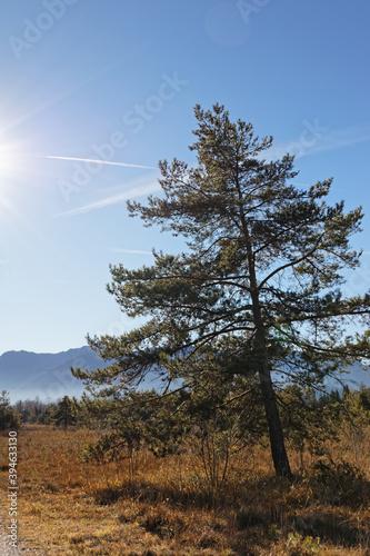 Die Isarauen nahe Lenggries im Herbst mit den Bayerischen Alpen im Hintergrund, Süd-Bayern, Deutschland © si2016ab