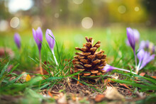 Fir Cone With Flowers On Grass...