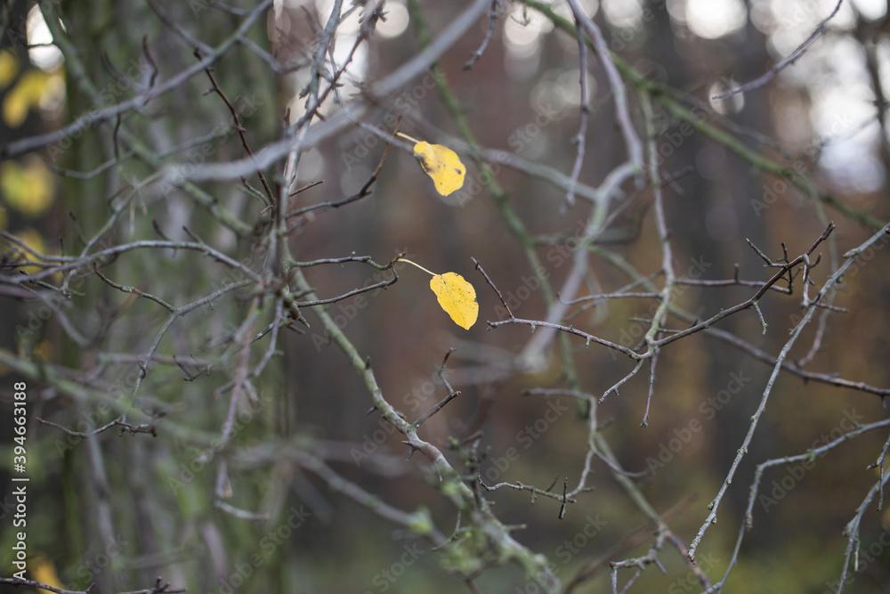 Fototapeta Złoty liść jesienią
