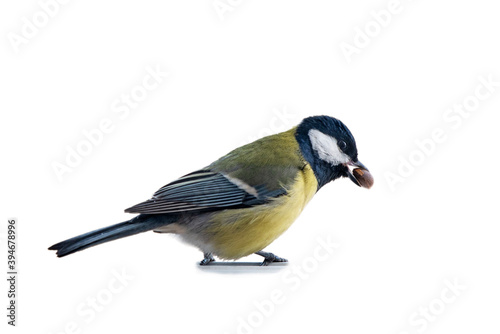 Carta da parati bird with a nut in its beak isolated on white background