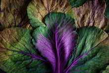 Colorful  Withered Leaves Of  ...