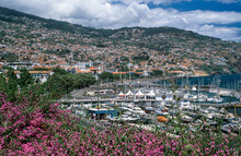 Funchal, City View With Port, ...