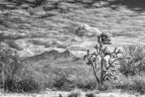 High Dynamic Range Black and White Image of a Mountain in Arizona with a Joshua Canvas Print