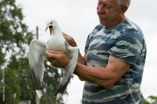 Cuadros en Lienzo a man holding a sick seagull with an open beak in his hands