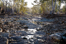 Gum Lined Creek Bed In Early Morning Light