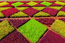 Madeira Botanical Garden In Fu...