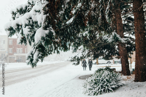 Fototapeta premium People walking under snow. Heavy snowfall and snowstorm in Toronto, Ontario, Canada. Snow blizzard and bad weather winter conditions. Snow lying on green fir tree branches outdoors.