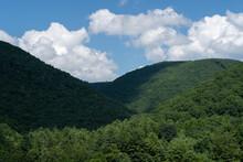 Tree Covered Hillsides