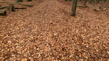 Looking At The Long Trail In The Forest, All Covered By Fallen Leaves During Autumn Season.