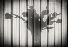 Shadow On The Vertical Blinds From The Flowers On The Windowsill. Black And White Photo.