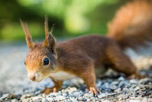 Adorable Squirrel With Bokeh