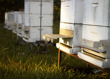 Close Up Of Beehives In Field And Late Afternoon Light