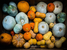 Colorful Different Pumpkins In...