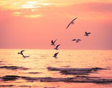 Seagulls Over The Sunset Sea